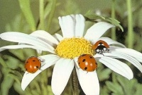 Как высоко могут залетать насекомые?