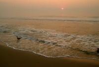Атлантическая треска может исчезнуть из-за роста кислотности океана