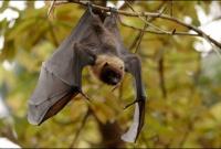 Ученые предсказывают массовое вымирание видов от аномальной жары