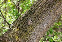 Лягушки-древолазы оценивают хромосомный набор самца на слух