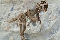У мощного маюнгазавра были крошечные ручки