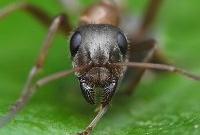 Почему в муравейнике не бывает пробок?