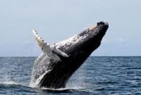 Загадочные самоубийства в океане