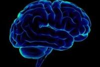 Мозг и возникновение сознания