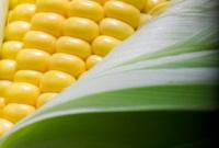 Врачи предупреждают: Избегайте генетически модифицированных продуктов