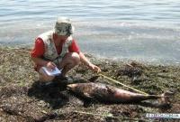 Украина: Керченские ученые обнародовали гипотезы о гибели дельфинов