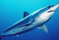 В Приморье обнаружен мертвый акуленок из опасного семейства мако