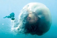 Прозрачные обитатели океана