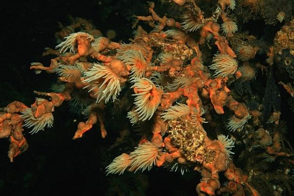 ловить кораллы