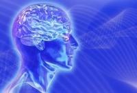 Тайна мозга и есть тайна творения?
