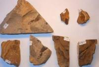 Забайкальские ученые узнали, как выглядит кожа динозавров