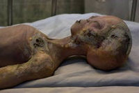 Анатомия пришельца