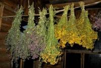 Лекарственные растения — главное средство знахаря